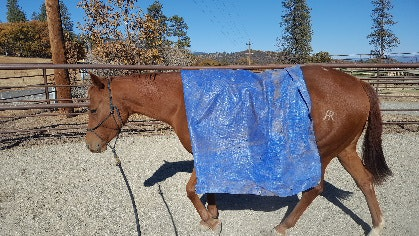 A brown horse standing next to a fence  Description automatically generated
