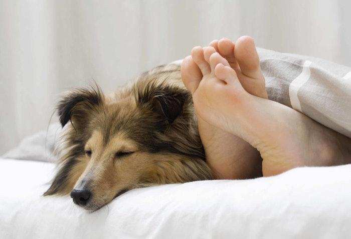 About | The Dog Lymphoma Community