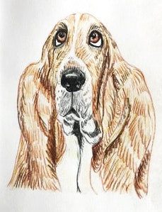 Tracey Siedenburg dog sketch
